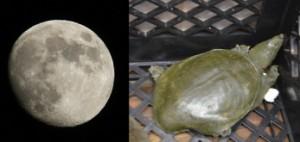 写真=月とすっぽん