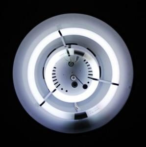 写真=一本の蛍光灯にホタル10匹が使用される